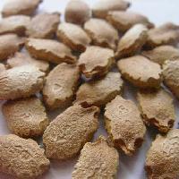 ニガウリ属 白褐色 ごつごつした種子