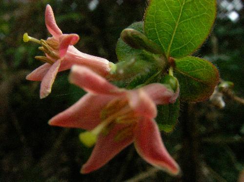 春 淡紅色(赤~ピンク)